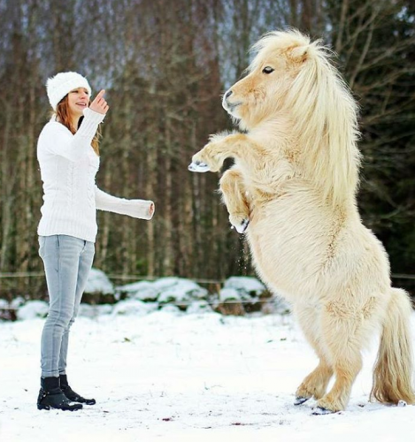 Pony and trainer playing in the snow